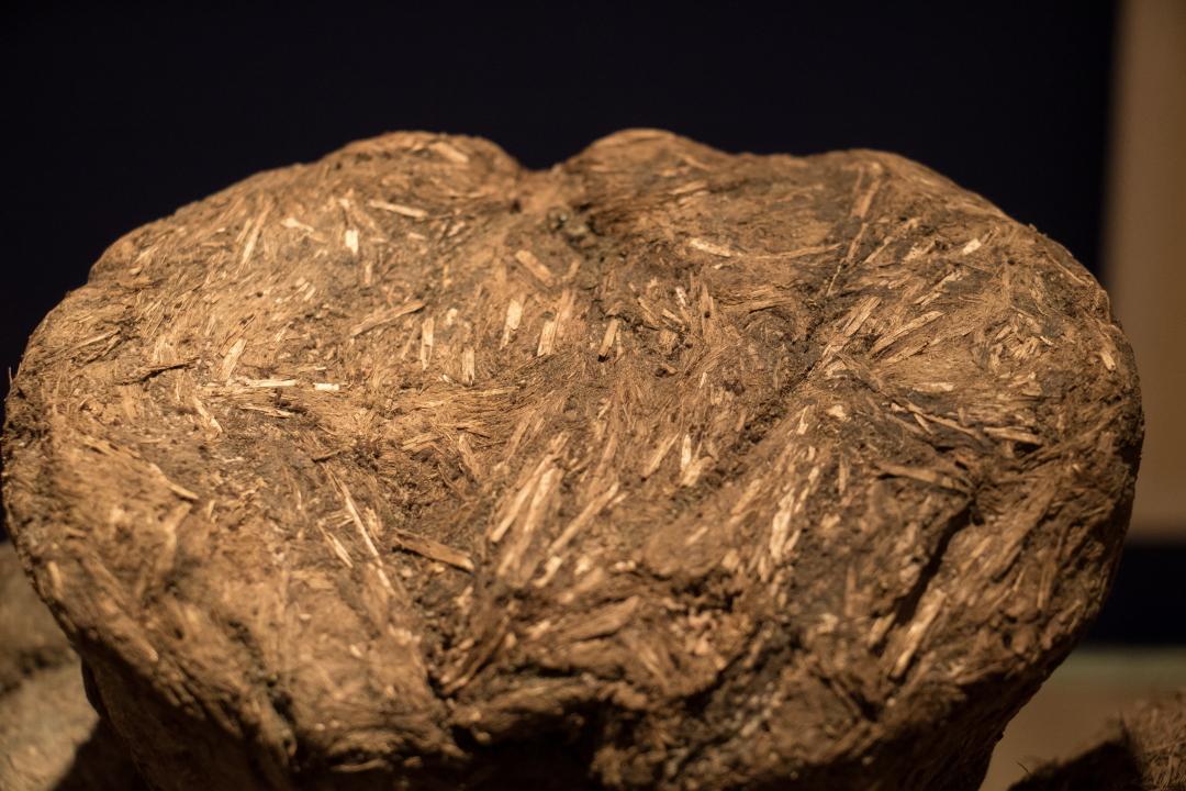 20 000 år gammal mammutbjas Bild: Torill Kornfeldt