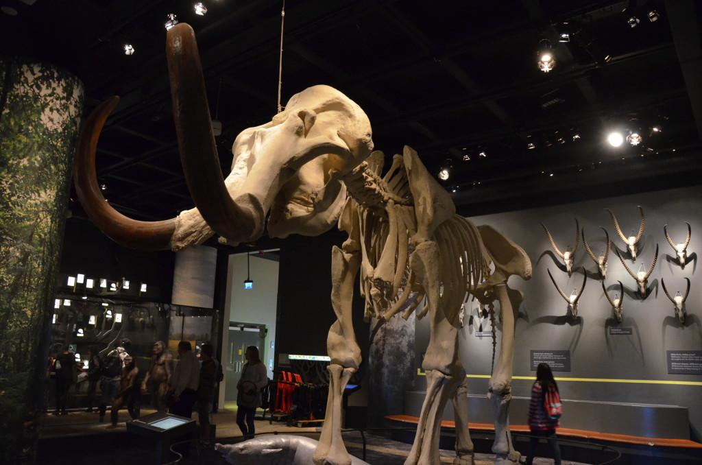 Vill du träffa en mammut på stäppen i Sibirien?  Foto: Federica Santoro